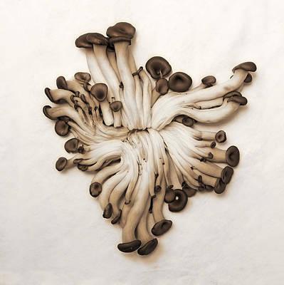 Baby Oyster Mushroom Art Print by Viktor Savchenko