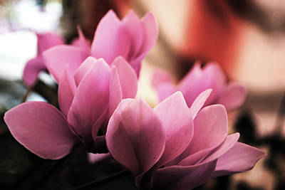Photograph - Baby Pink Petals by Sumit Mehndiratta