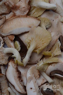 Photograph - Baby Portobello & Oyster Mushrooms by Photo Researchers, Inc.