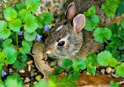 Baby Rabbit Art Print