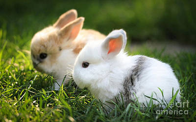 Babies Mixed Media - Baby Rabbits  by Marvin Blaine