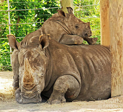 Photograph - Baby Rhino And Mom by Terri Mills