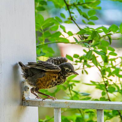 Baby Bird Photograph - Baby Robin - Testing Testing 1 2 3 by Steve Harrington