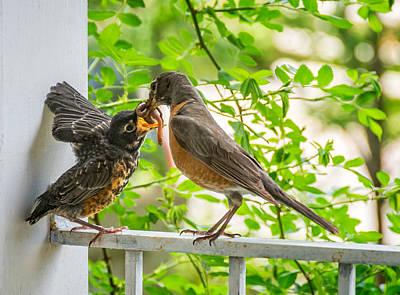 Baby Bird Photograph - Baby Robin - Yummy by Steve Harrington