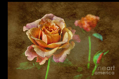 Photograph - Baby Rose And Bud by Shirley Mangini