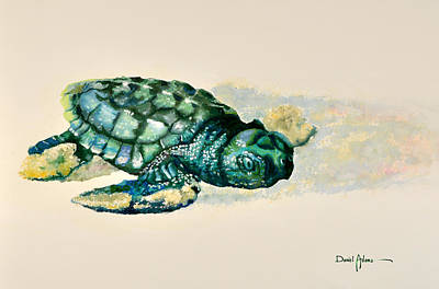 Reptiles Royalty-Free and Rights-Managed Images -  DA150 Baby Sea Turtle by Daniel Adams  by Daniel Adams