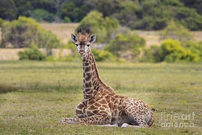 Baby Series Giraffe Art Print