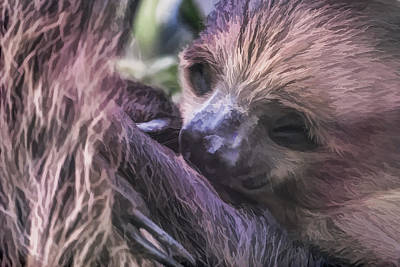 Digital Art - Baby Sloth by Ray Shiu