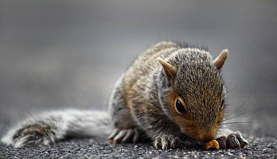 Photograph - Baby Squirrel Gets A Snack by Andrew Pacheco