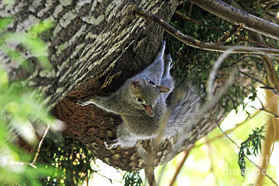 Photograph - Baby Squirrel On The Loose by Trina  Ansel