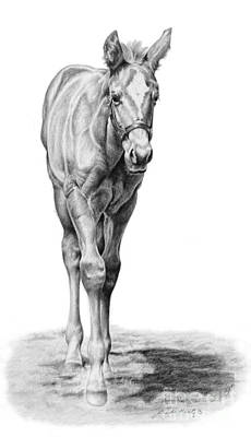 Thoroughbred Drawing - Baby Steps by Linda Shantz