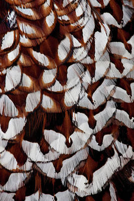 Pheasant Photograph - Back Feathers Of Copper Pheasant by Darrell Gulin