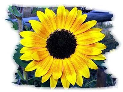 Back Forty Sunflower Art Print