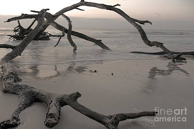 Dead Tree Trunk Digital Art - Back From The Edge by Glenda Wright