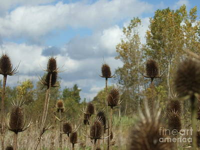 Art Print featuring the photograph Back To Nature by Deborah DeLaBarre