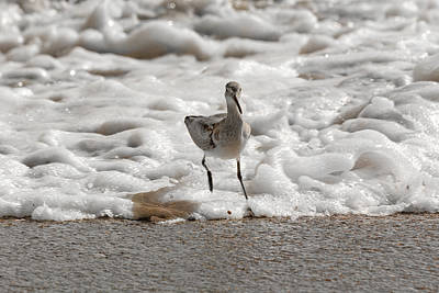 Sandpiper Wall Art - Photograph - Back To Safety  by Betsy Knapp