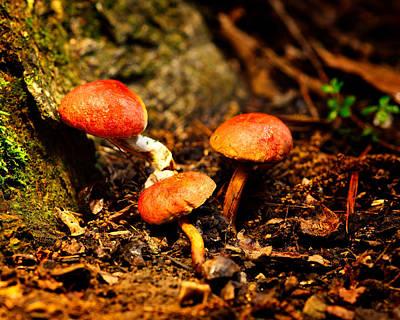 Photograph - Back Yard Mushrooms by Walt Sterneman