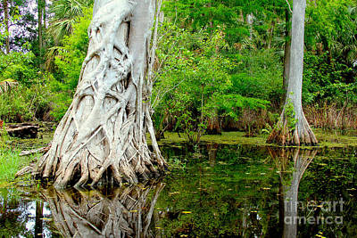 Florida Swamp Photograph - Backcountry by Carey Chen