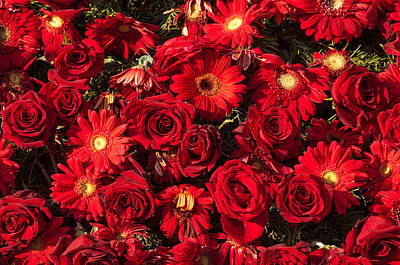 Photograph - Background Of Red Roses And Daisies by Connie Cooper-Edwards