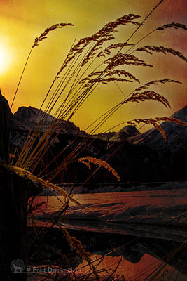 Photograph - Backlight Grass by Fred Denner