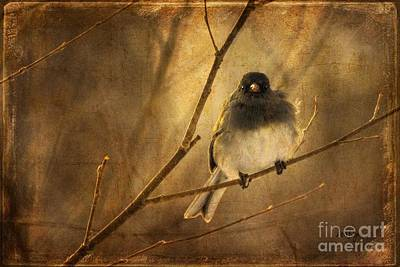 Backlit Birdie Being Buffeted  Art Print