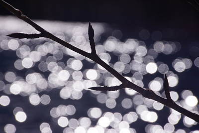 Photograph - Backlit Branch by Michael Courtney