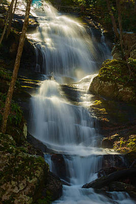 Photograph - Backlit Buttermilk by Mark Robert Rogers
