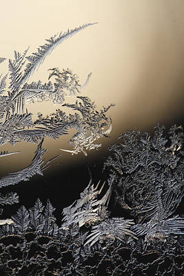 Backlit Frost Traceries At Sunset Original by Ulrich Kunst And Bettina Scheidulin