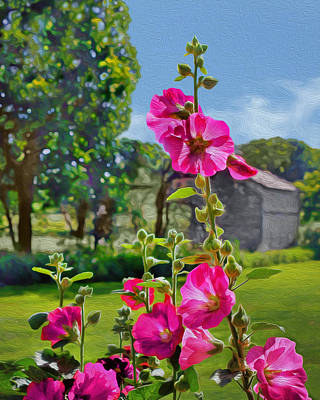 Backlit Hollyhocks - Farm Art Print by Nikolyn McDonald