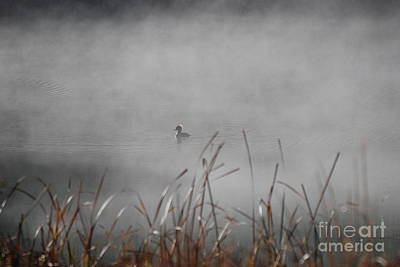 Photograph - Backlit Hooded Merganser by Amy Porter