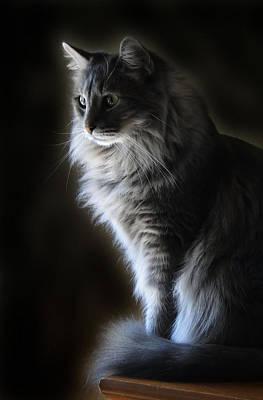 Backlit Kitty Art Print by Carolyn Fletcher