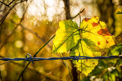 Art Print featuring the photograph Backlit Leaf. by Gary Gillette