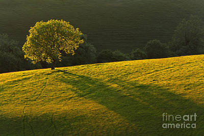 Contre-jour Photograph - Backlit Oak Tree On The South Downs by Richard Thomas