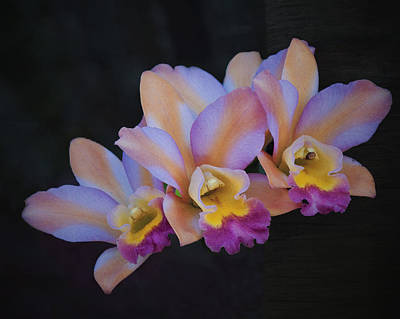 Backlit Orchids Art Print by Ed Roth