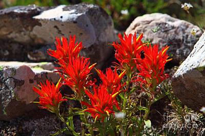 Photograph - Backlit Paintbrush by Bill Singleton
