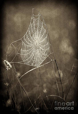 Photograph - Backlit Spider Web In Sepia Tones by Dave Welling