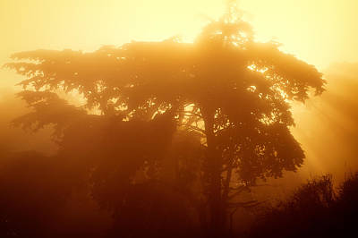 Photograph - Backlit Tree In Fog by Chris Bordeleau