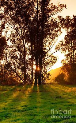 Grateful Dead - Backlit tree in the Sun by Wernher Krutein