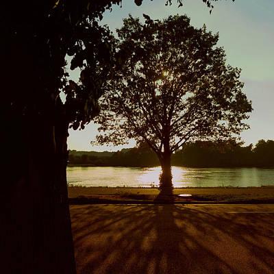 Photograph - Backlit Tree by Joseph Skompski