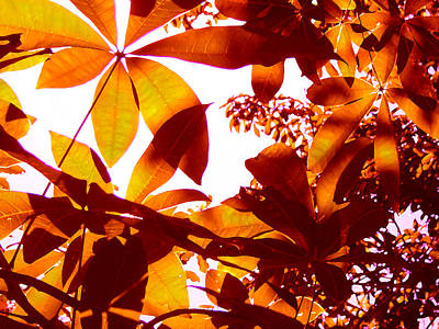 Painting - Backlit Tree Leaves 2 by Amy Vangsgard