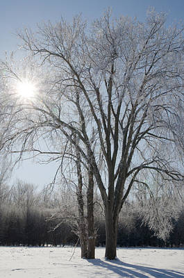 Photograph - Backlit Tree With Hoar Frost by Rob Huntley