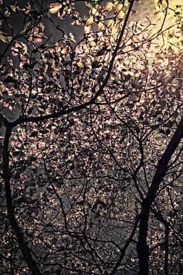 Photograph - Backlit Trees In Sunrise by Maggie Vlazny