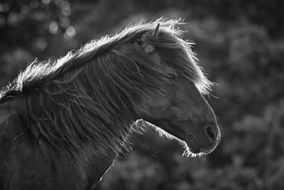 Photograph - Backlit Wild Horse In Black And White by Bob Decker