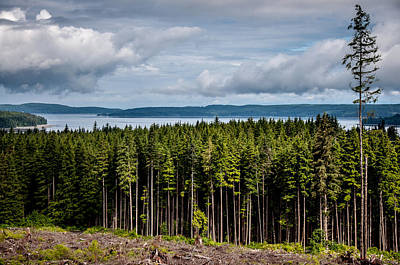 Photograph - Logging Road Landscape by Roxy Hurtubise