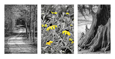 Photograph - Backwoods Escape Triptych by Carolyn Marshall