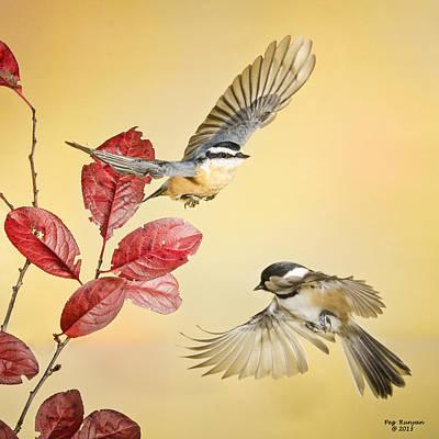 Photograph - Backyard Bird Ballet by Peg Runyan