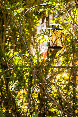 Photograph - Backyard Bird Feeder by Melinda Ledsome