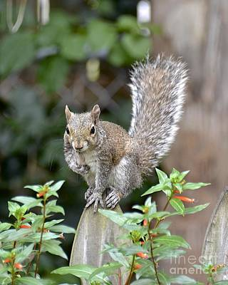 Photograph - Backyard Burglar by Carol  Bradley