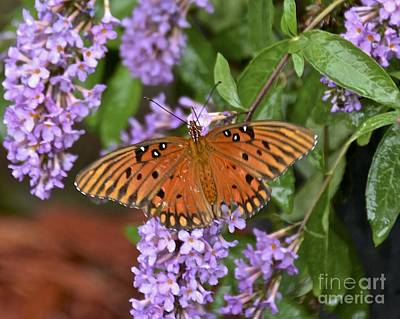 Photograph - Backyard Butterfly by Carol  Bradley