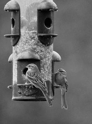 Photograph - Backyard Feeders Bw by Maria Urso